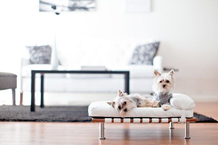 Dogs also like good design and Feng Shui